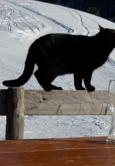 Katze im Skigebiet